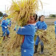 地域活動 学童農園稲刈り